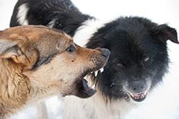 aggressive-dog aggressive dog training Aggressive Dog Training aggressive dog aggressive dog training Aggressive Dog Training Programs & Classes aggressive dog