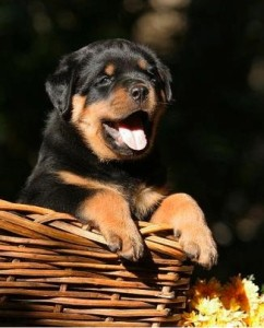 choosing-your-puppy. choosing your puppy Choosing Your Puppy choosing your puppy choosing your puppy Choosing Your Puppy With Professional Help choosing your puppy