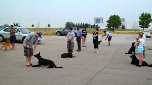 group-dog-training-300x168 group dog training Group Dog Training group dog training group dog training Group Dog Obedience Training Programs & Classes group dog training 300x168