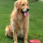 larry Dog Training - What People Are Saying About Us! Dog Training - What People Are Saying About Us! larry testimonials Testimonials larry 150x150