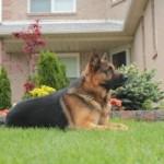 testimonials5-150x150 Dog Training - What People Are Saying About Us! Dog Training - What People Are Saying About Us! testimonials5 testimonials Testimonials testimonials5 150x150