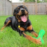 Read About Our Quality Raw Food! Read About Our Quality Raw Food! Harley2  Testimonials Harley2 150x150