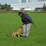German Shepherd Dog Training IPO Sport TEAM-K9 Tracking Dogs  Group Dog Training DSC0796 1 150x150