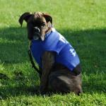 Group Dog Training DSC0806 1 150x150