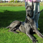 Group Dog Training DSC0811 1 150x150