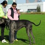 Group Dog Training DSC0822 1 150x150