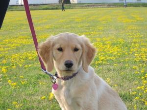 Best Puppy Training TEAM-K9 puppy training Puppy Training IMG 3487 300x225