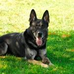 Dog Training unnamed 1 150x150