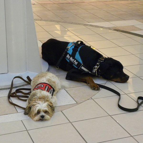 TEAM-K9 dog training puppy training Mississauga, Oakville, Brampton, Milton, Caledon, Bolton train your dog You, Your Dog, and Training 10686728 952897134727705 2597587381732632342 n