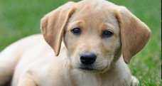 Oakville-Dog-Trainer dog training Dog Training Puppy Training Oakville Oakville Dog Trainer