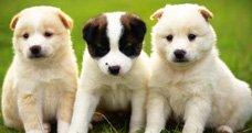 Toronto-Dog-Trainer dog behaviour & pet obedience training in toronto Dog Behaviour & Pet Obedience Training in Toronto Toronto Dog Trainer
