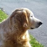 TEAM-K9 best raw dog food in Mississauga  Testimonials TEAM K9 Jennifer 150x150