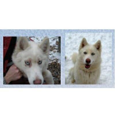 Nutrazinc, dog healthy coat, dog feet healing, nutritional supplement